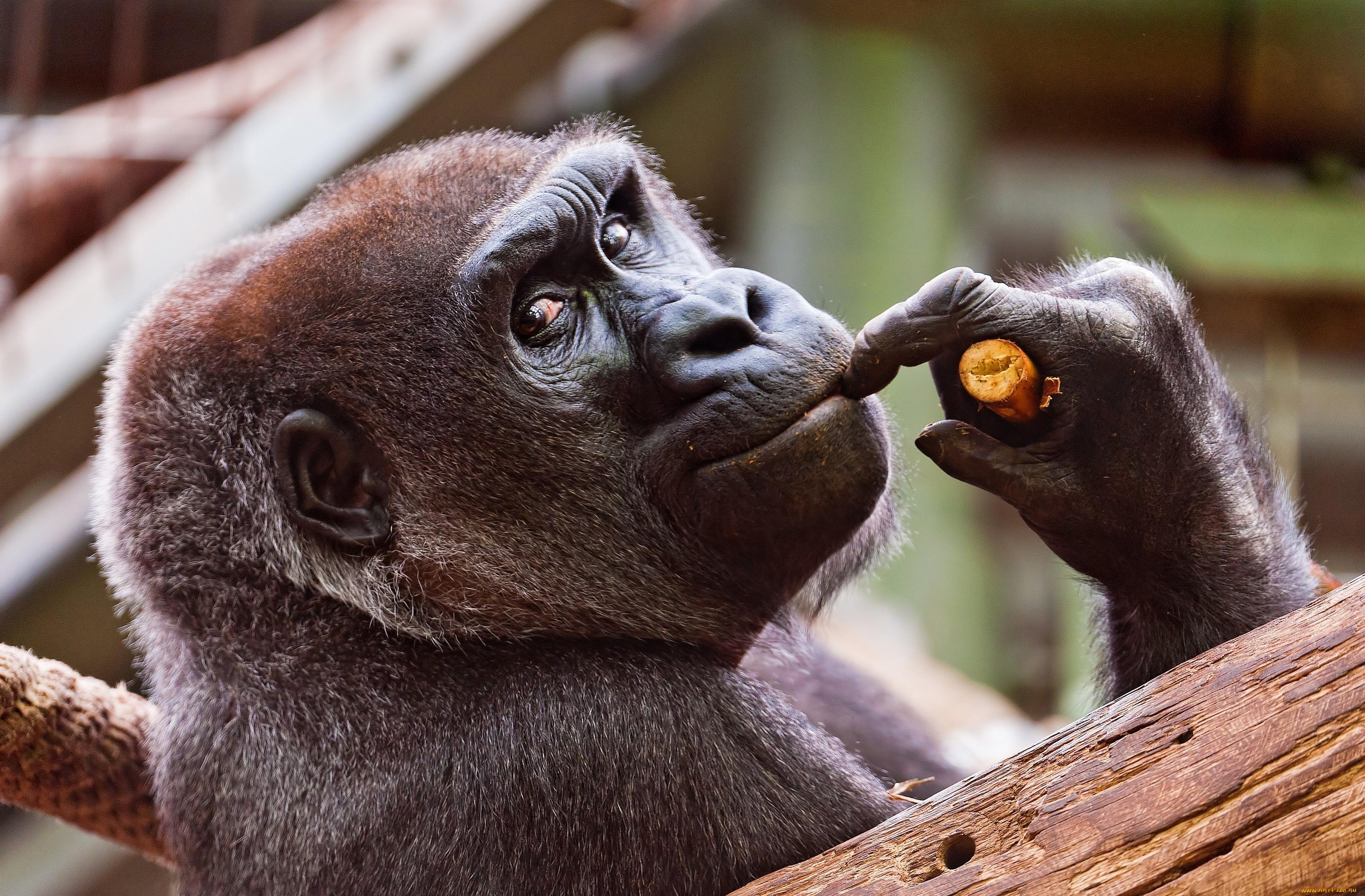 это практически смотреть фото забавные животные участвующий должен